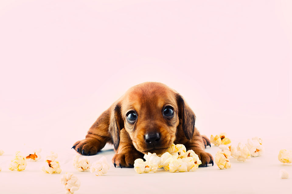 adorable puppy with popcorn kernels